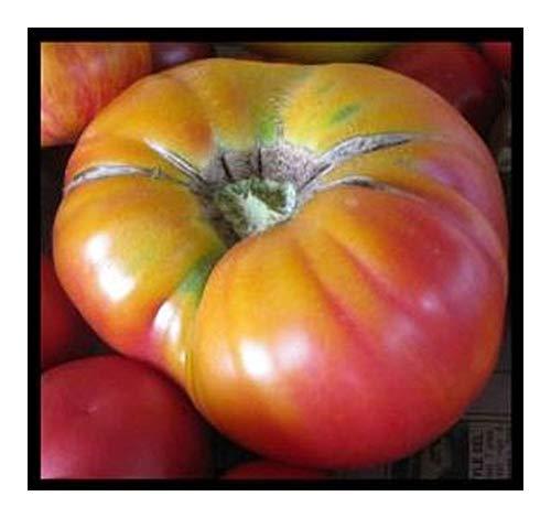 Tomato Beefsteak Pineapple - Tomate Heirloom - 20 graines