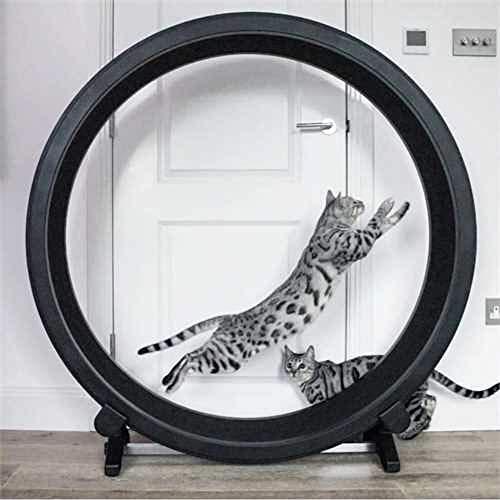 PaylesswithSS Roue d'exercice pour chat en plastique recyclé léger et robuste