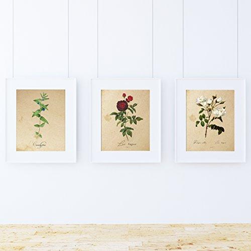 Pack de láminas MEDITERRANEO. Tres láminas tamaño A4. Posters con imágenes de botánica. Decoración de hogar. Láminas para enmarcar. Papel 250 Gramos