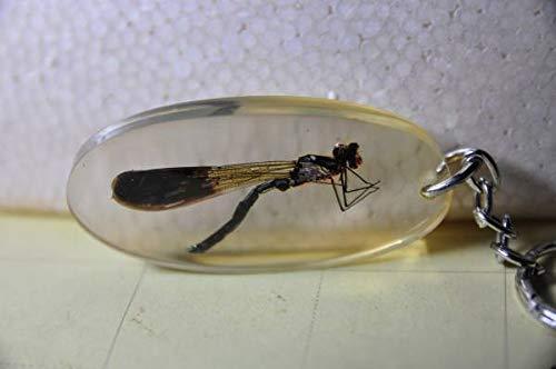 昆虫標本キーホルダー トンボ イトトンボ