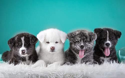 Kit de pintura de diamantes para adultos con diseño de familia de perros, bordar punto de cruz,5d diamond painting suministros de arte y manualidades, decoración de pared, 40 x 30 cm