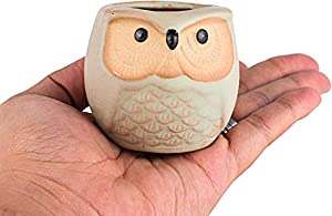 2.5 Inch Owl Ceramic Succulent Planter Pots with Drainage Hole Set of 6, Flowing Glaze Porcelain Handicraft Plant Holder Container Gift for Mom Sister Aunt Best for Home Office Garden Decoration