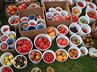 Seeds Package: Germination Seeds PLATFIRM-Mix from 165 Different Kinds of Tomatoes Seeds