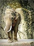 Rompecabezas De 1000 Piezas,Serie De Animales Lonely Elephant Wooden Family Puzzle Set, Desafío Cerebral Para Niños Jigsaw Games, Rompecabezas Intelectuales De Educación Padre-Hijo, Decoración De