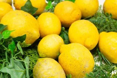 【無選別】広島県産(とびしま)レモン3kg無・無(広島県とびしま農園)産地直送ふるさと21