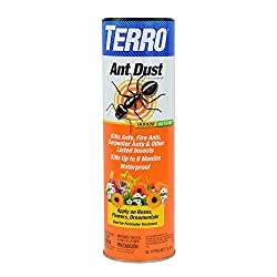 What Is the Best Ant Killer on the Market?