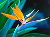 YHHAW Bird of Paradise Flower Puzzle,Puzzles for Adults,Jigsaw Puzzles,Wooden Puzzle 1000 Pieces
