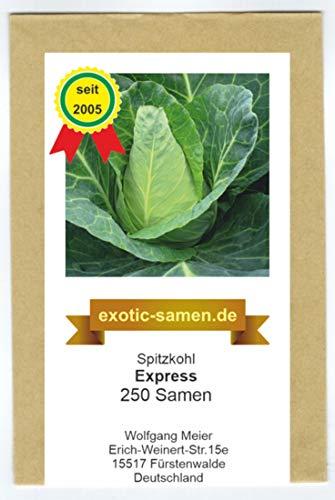 Spitzkohl Express - Frühe Sorte - Weißkohl - 250 Samen