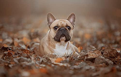 LHJOY Funny Adult Puzzle 1000 Piece Leaf Dog French Bulldog