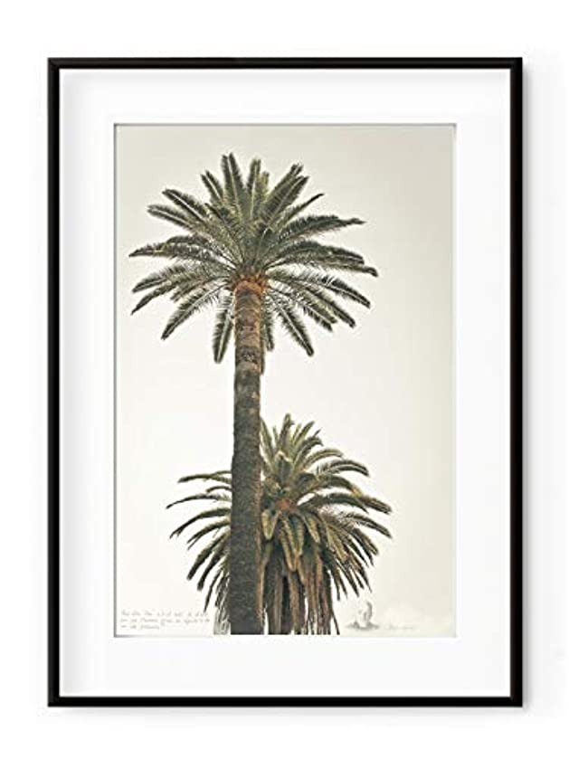 Large Palm Trees, White Varnished Wood Frame, with Mount, Multicolored, 30x40