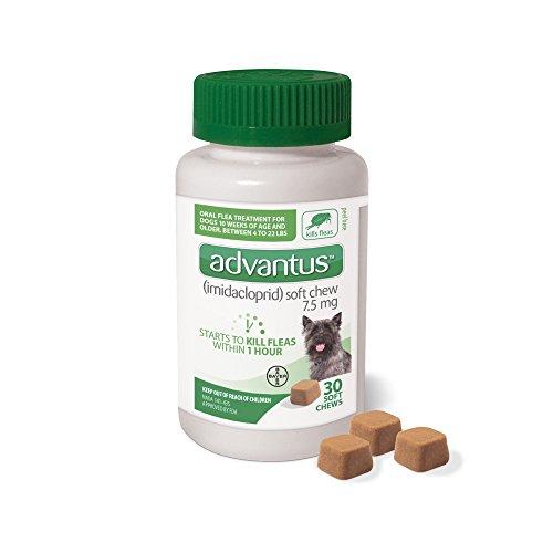 Bayer Advantus Small Dog - 7.5 mg - 30 ct