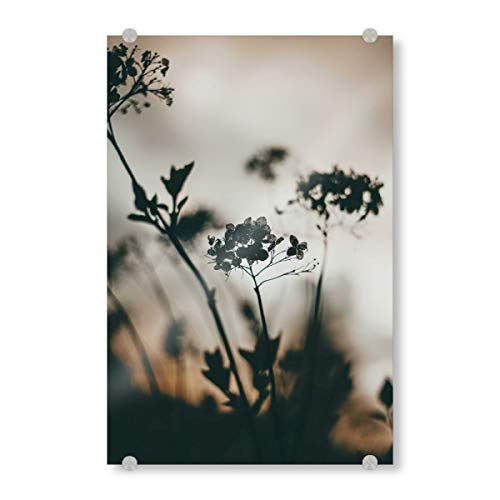 artboxONE Acrylglasbild 120x80 cm Natur Silhouette Plant Bild hinter Acrylglas - Bild Plant Pflanze Closeup