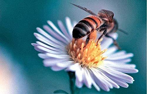 CHANGWW Stichsägefür Erwachsene 1000 Stück Holzbiene Honig Muster Spielzeug für Erwachsene und Jugendliche