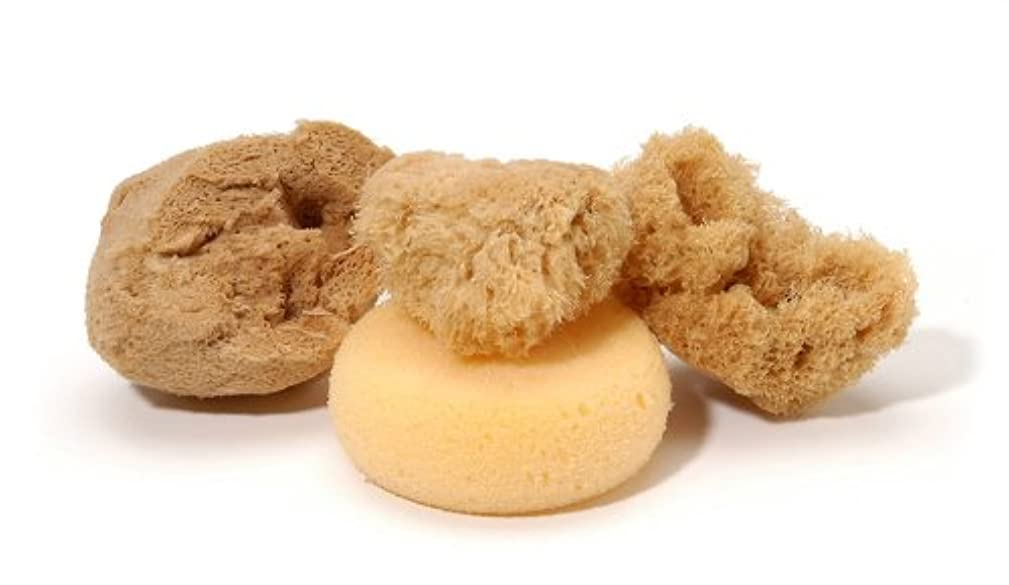 Darice Artist Sponges (4pc) – Includes 3 Natural Sea Sponges and 1 Rounded Artificial Sponge – Finely Grained, Highly Absorbent, Various Textures – For Pottery, Ceramics, Painting, Staining and More