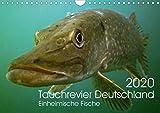 Tauchrevier Deutschland (Wandkalender 2020 DIN A4 quer)