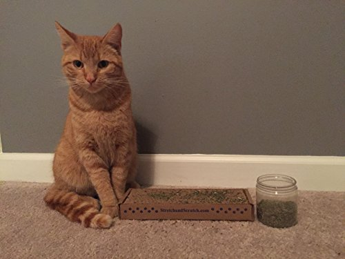 Cat Weed Catnip-1 Cup