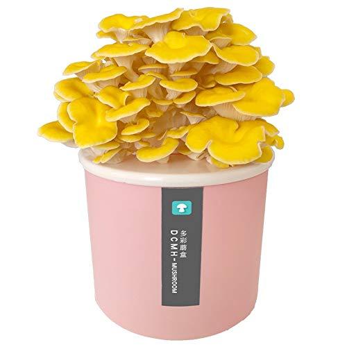 TL Pilze Züchten Set, Limonenpilz als Dübel-Brut zum Selber Züchten - Frische Pilze Ernten - Bonsai Starter KitPink