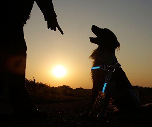 PRECORN LED Hundegeschirr Leuchtgeschirr Brustgeschirr Sicherheitsgeschirr Geschirr blau Gr. M
