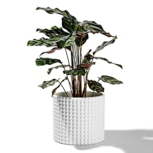 POTEY 055102 Planter Pots Indoor – 6.1 Inches Ceramic Vintage-Style Hobnail Textured Flower Planter Pots with Drainage Hole for Indoor Plants Flower Succulent Modern Home Decor(Plants NOT Included)