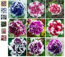 Elwyn 200pcs Bonsai Petunia Seeds Mixed Color Petals Double Petunia Seeds