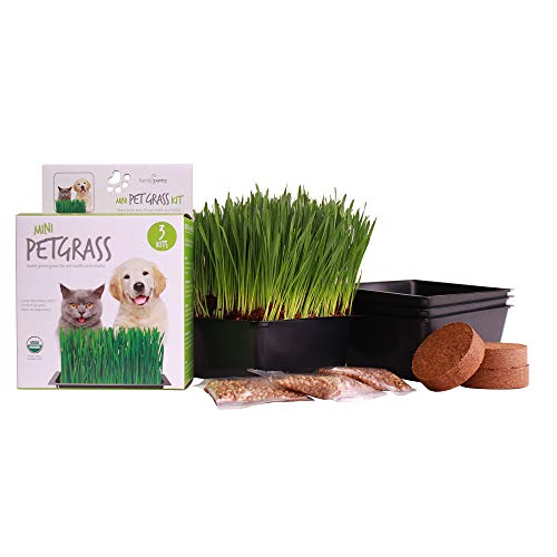 Handy Pantry Organic Cat Grass Kit - Includes 3...