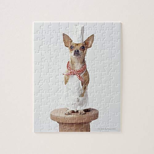 Scott397House Jigsaw Puzzles 1000 Pieces For Adults Large Piece Puzzle Chihuahua Dog Wearing Chef's Whites, Studio Shot Fun Game Toys Birthday Gifts Fit Together Perfectly