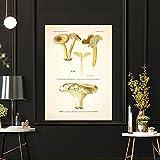 CloudShang Vintage Seta Botánico Poster Atlas de Comestible y Venenoso Hongos Plantas Poster Seta Pared Arte Impresiones Escuela Aula Oficina Pared Decoracion G06133