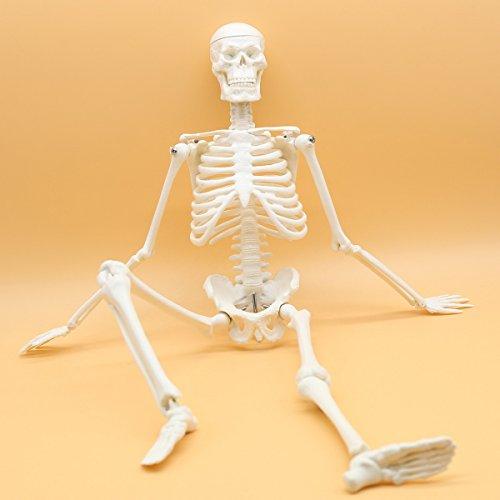 Maymii PVC Anatomical Human Skeleton Model Medical Poster Bonnet Stand,1/4 Life Size,45cm