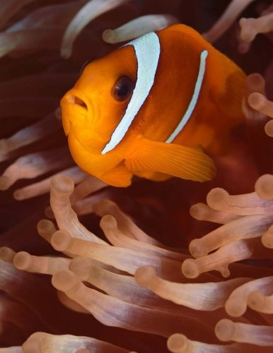 Clown Fish: Notebook with 150 lined pages (Fishes of the World, Band 1)
