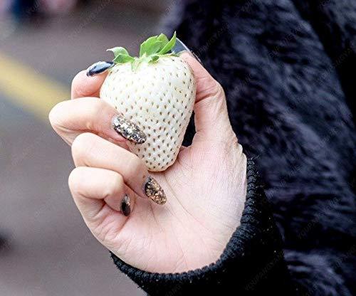 Elitely 100 piezas de semillas de fresa de color para jardín Bonsái Balcón Pot pasó cuatro estaciones fácil de cultivar fresa Fru