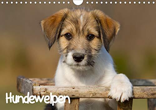 Hundewelpen (Wandkalender 2021 DIN A4 quer)
