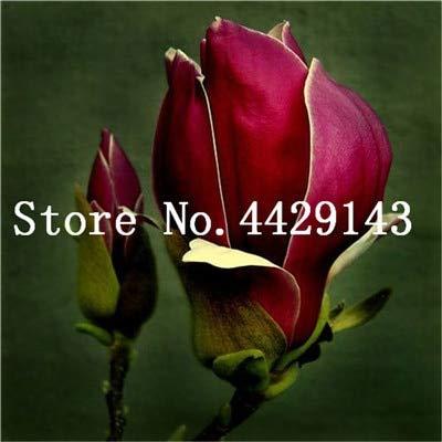 RETS Red Magnolia Bonsai Häufige Magnolia Blumen Bonsai Pot Hausgarten-Anlagen die gesamte Palette der Blumen 50 PC: 8