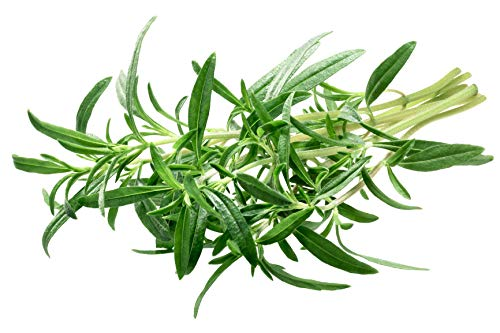 Savory Summer Herb Seeds - 1 Gram - Non-GMO