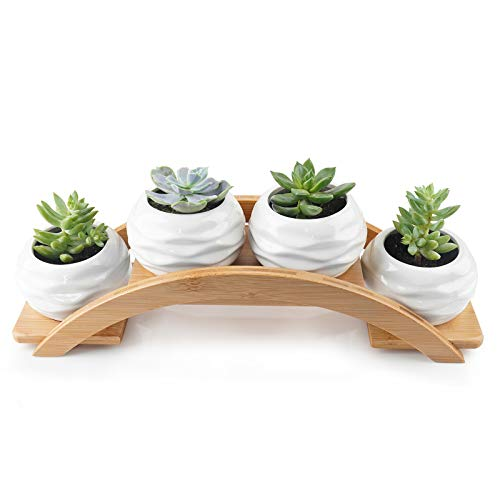 Keramik Sukkulenten Töpfe, Kaktus Pflanze Pflanzentopf, Kleine Weiße Blumentopf, Blumentöpfe Bonsai Schale Deko Topf Flower Pot Mit Bambusbogenschale