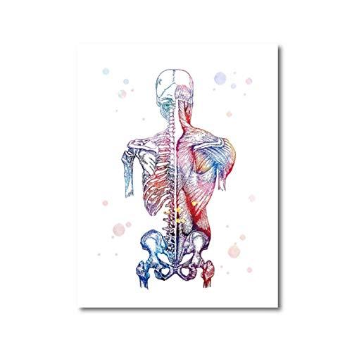 Wwjwf Arte De La Lona Impreso Imagen Modular Músculos Humanos Cartel Nórdico Esqueleto Anatomía Pintura De La Acuarela Cuerpo Médico Decoración De La Pared 60X80Cm Sin Marco