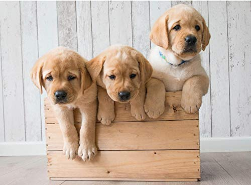 pictures of cute puppies - 4