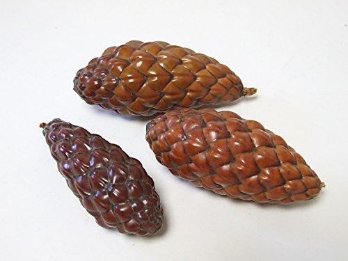 CF-NatureCraft 5 Stück Tika Nuss Zapfen extra 8-11cm Natur/Exoten/ exotische Frucht getrocknet/Nussfrucht/ Zapfenfrüchte/Kränze/ Gestecke/Weihnachten (Natur)