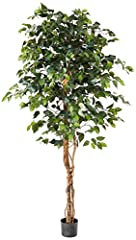Over 1008 Individual Leaves adorn this tree's trunk and several branches Unlike the real Ficus tree (which is finicky and practically leafless in almost any home light conditions), our Ficus tree is eternally verdant and deep green. Measuring six fee...