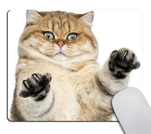 Smooffly Mousepad with cat Fluffy cat Desk Accessories Mousepad Cute Desk Decor Mousepad Funny Cat paw Print White Mousepad Office Decor