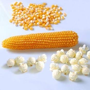 David s Garden Seeds Popcorn Mushroom SAL8577  Yellow  100 Non-GMO Hybrid Seeds