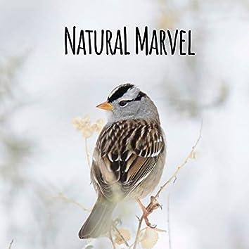 Natural Marvel