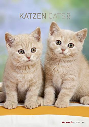 Katzen 2020 - Cats - Bildkalender (24 x 34) - Tierkalender - Wandkalender