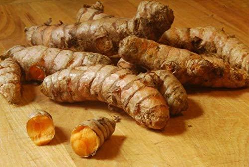 FERRY Bio-Saatgut Nicht nur Pflanzen: 25: Organische Kurkuma Curcuma Longa HDI Rhizome für den Anbau von Hoch Curcumin Vue