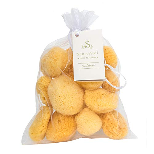Natural Mediterranean Sea Sponges 13 Pieces Pack 1.5 - 3.0 inches Fine Silk for Cosmetic Usage, Makeup Application, Face Cleansing, Soft Exfoliation, by Sense and Soil