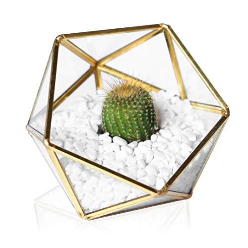 Glass Geometric Terrarium - Succulent Planter - Clear Box for Garden/Outdoor/Indoor/Home Decoration, Wedding Gift, Centerpiece/Candle - Brass Planter/Plant Holder for Tabletop Display (Gold)