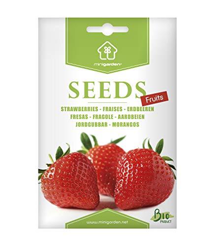 Erdbeeren, Samen von Minigarden, enthält zwischen 300 und 340 Samen