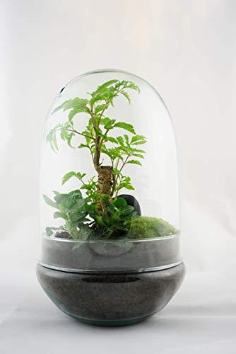 Flaschengarten Egg-4 DIY-Set/Terrarium/Biotop/Ökosystem: stilvolles Wohnaccessoire mit echten Pflanzen, ideal als Geschenk