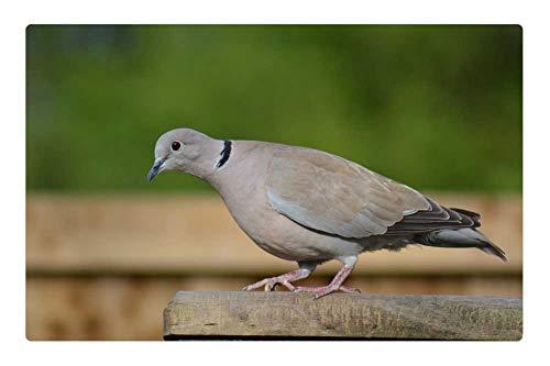 LESGAULEST Doormat Floor Rug/Mat (23.6 x 15.7 inch) - Ring-Neck Dove Streptopelia Capicola Cape Dove Bird