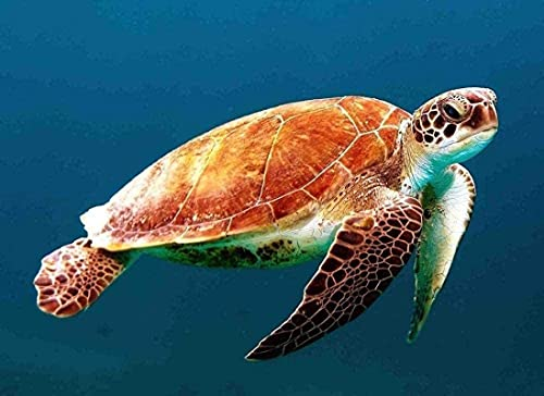 HJHJHJ Adultos Rompecabezas Tortuga Marina Naturaleza Vida Silvestre 2000 Piezas 100x70cm