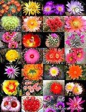 VISA STORE Color Mix @ j @ exotiques Cactiing Desert graine grasse Seed 20 Seeds